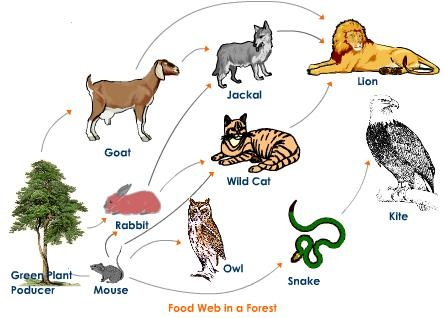 Food Webs And Food Chains Ecological Life